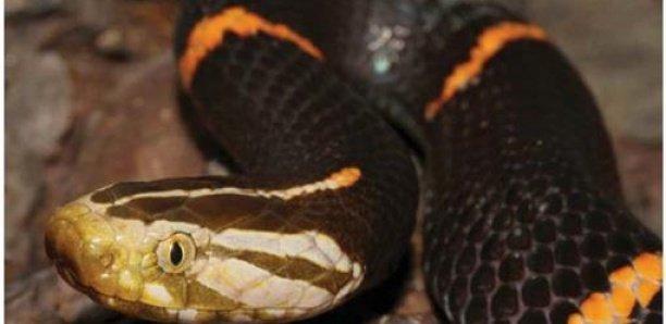 Une femme retrouvée morte avec un python