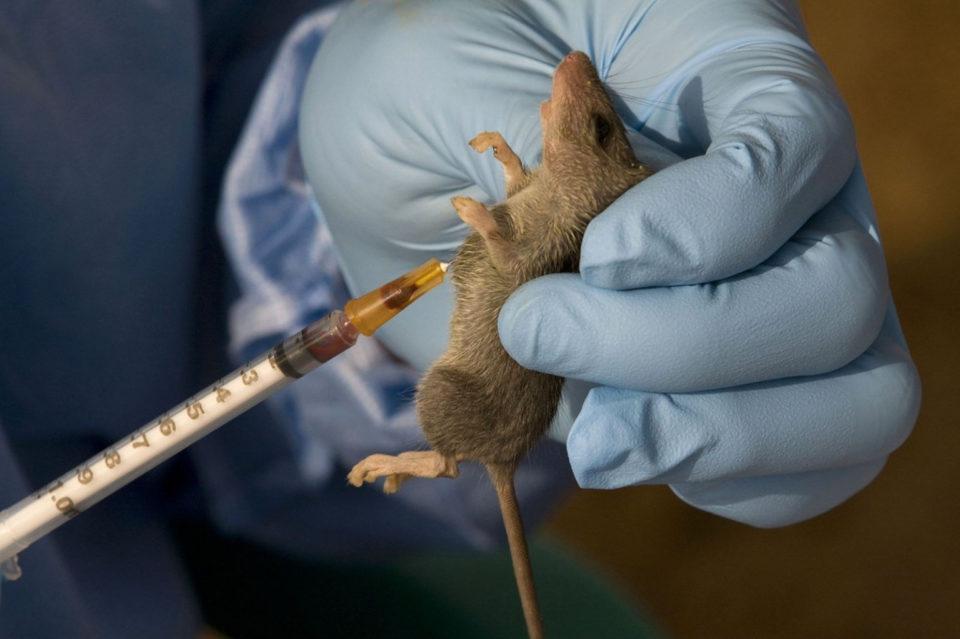 Nigéria La fièvre de Lassa fait quatre morts à Kogi