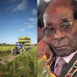 Le Zimbabwe offre une compensation de 2,7 milliards de livres sterling à 4500 agriculteurs blancs dont les terres ont été saisies par Robert Mugabe