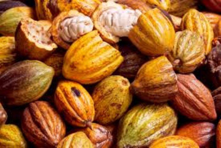 Côte d'Ivoire : Alassane Ouattara annonce l'augmentation du prix du cacao
