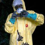 Gabon : des scientifiques étudient des chauves-souris porteuses de coronavirus pour tenter de prévenir une nouvelle pandémie